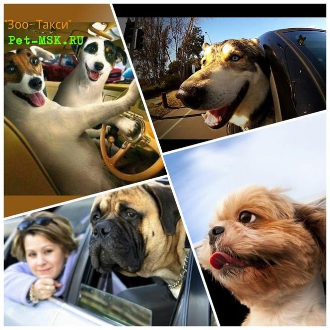 Перевозка домашних животных Москва